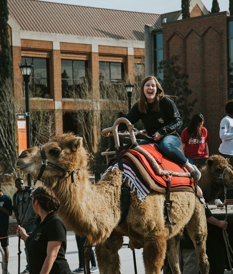 Student rids camel on Cruz Plaza